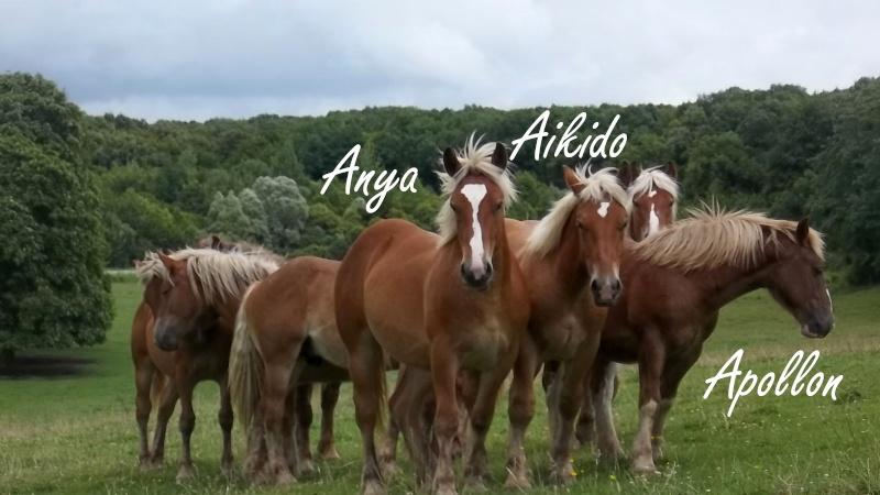 Dpt 70, Avalon, Artiste (Décédé 2015) et Aikido, ONC trait, sauvés par py (Août 2011) 106_0131