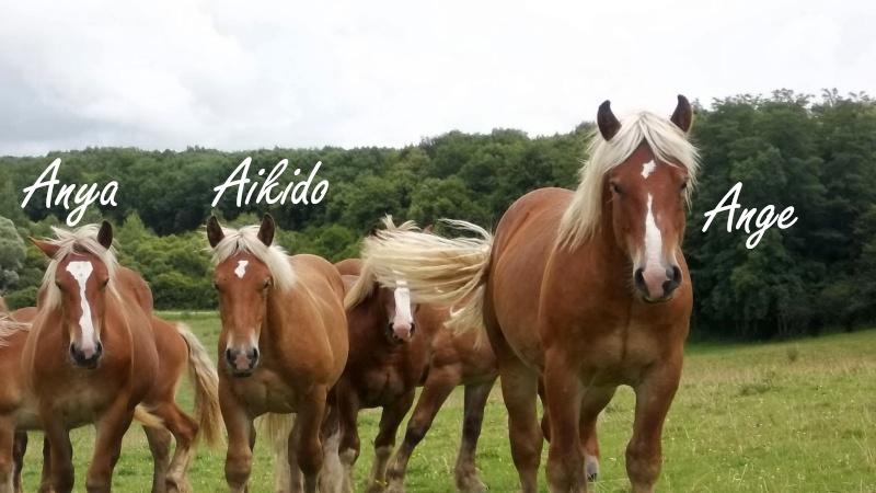 Dpt 70, Avalon, Artiste (Décédé 2015) et Aikido, ONC trait, sauvés par py (Août 2011) 106_0132