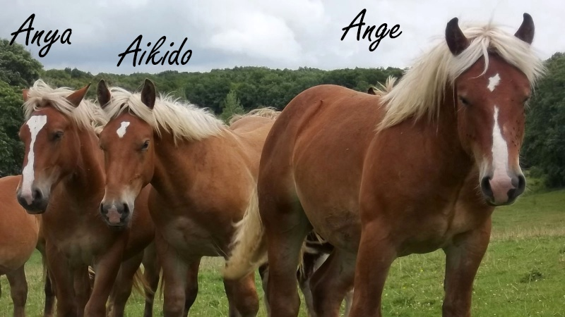 Dpt 70, Avalon, Artiste (Décédé 2015) et Aikido, ONC trait, sauvés par py (Août 2011) 106_0133