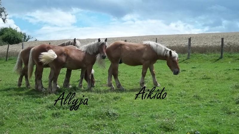 Dpt 70, Avalon, Artiste (Décédé 2015) et Aikido, ONC trait, sauvés par py (Août 2011) 106_0136