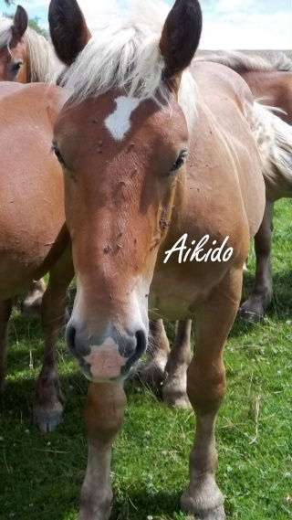 Dpt 70, Avalon, Artiste (Décédé 2015) et Aikido, ONC trait, sauvés par py (Août 2011) 106_0138