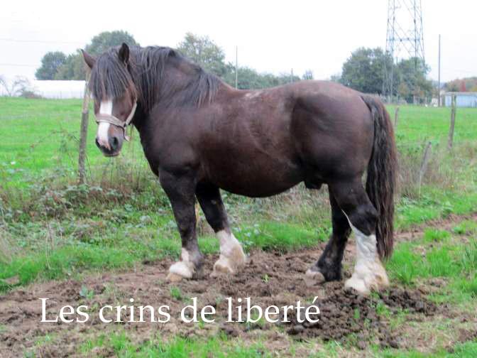 Dpt 35 - Doudou de la rablais - Trait Breton PP - Sauvé par Gaëlle ! (Août 2014) - Page 2 44632210