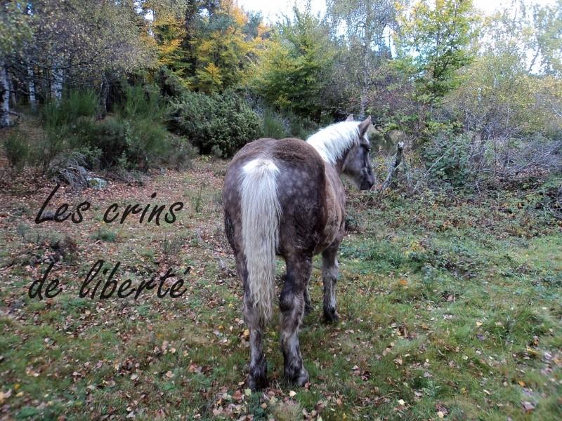 Dpt 43 - Bambi 68 - Comtois PP - Réservé par DizzyLizzy ! ANGLETERRE (2011) - Page 6 Dsc00012