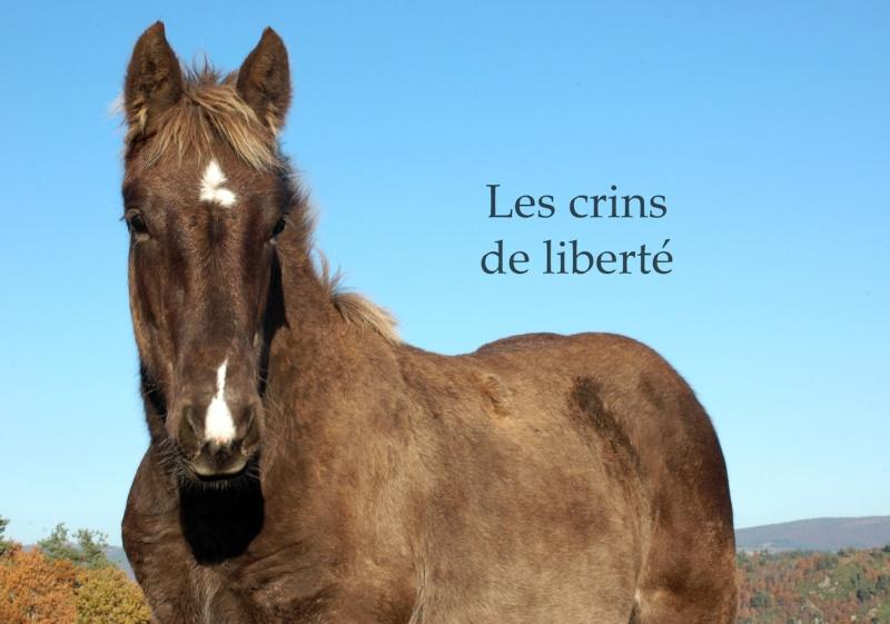 Dpt 48 - Capucine - OC Comtoise - Sauvée par Ann Crowe !! ANGLETERRE (2012) Dsc_0190
