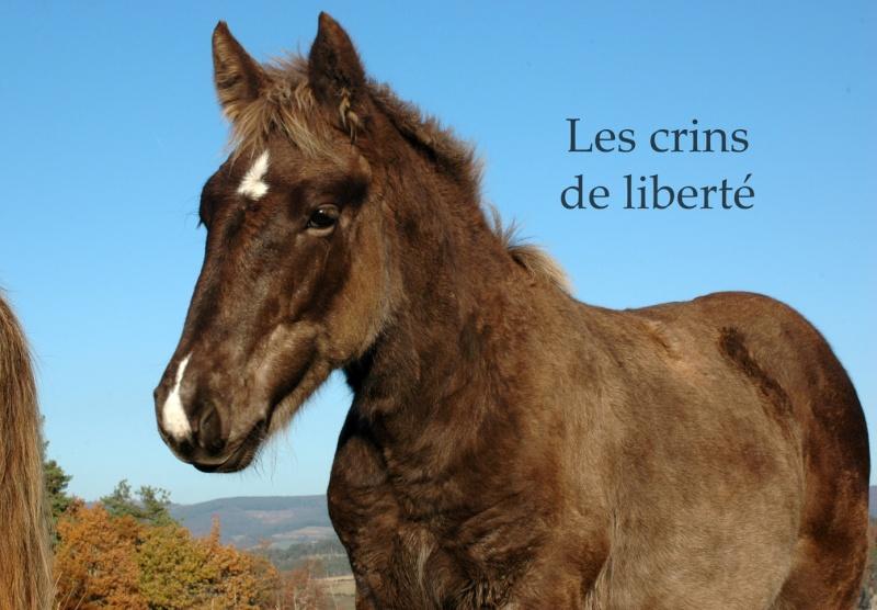 Dpt 48 - Capucine - OC Comtoise - Sauvée par Ann Crowe !! ANGLETERRE (2012) Dsc_0192