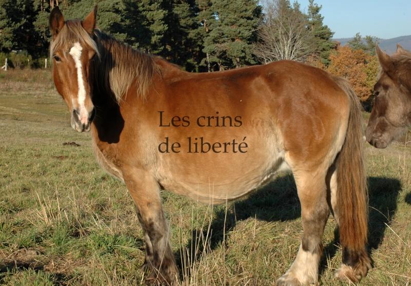 Dpt 48 - Capucine - OC Comtoise - Sauvée par Ann Crowe !! ANGLETERRE (2012) Dsc_0193