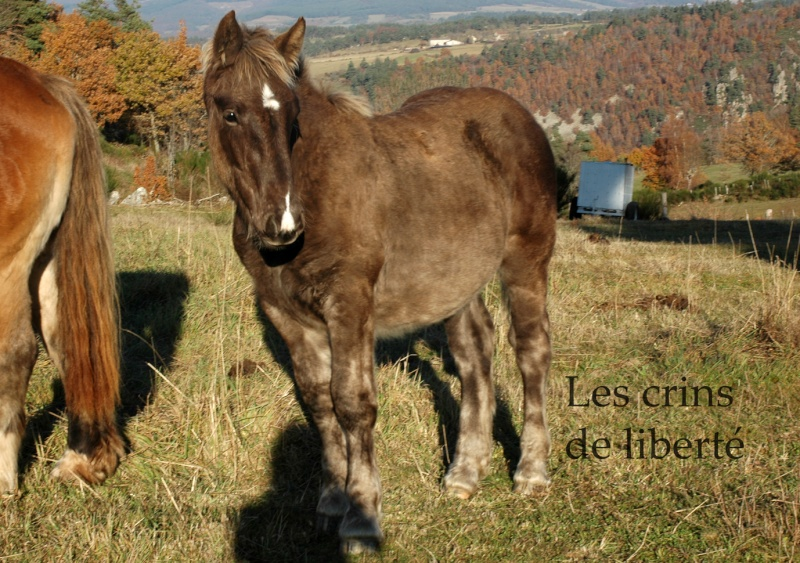 Dpt 48 - Capucine - OC Comtoise - Sauvée par Ann Crowe !! ANGLETERRE (2012) - Page 2 Dsc_0195