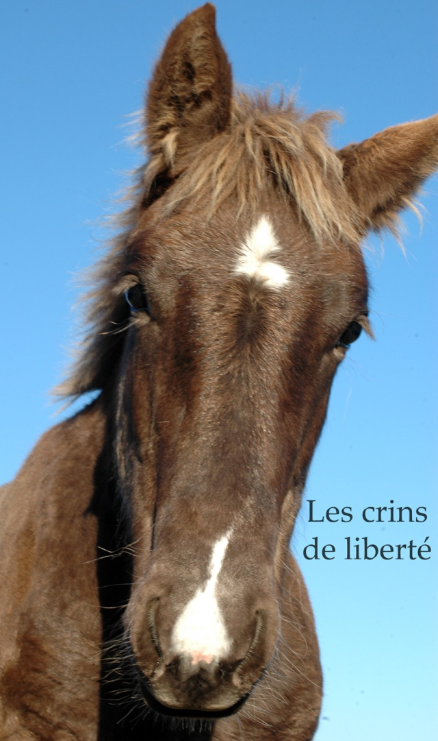 Dpt 48 - Capucine - OC Comtoise - Sauvée par Ann Crowe !! ANGLETERRE (2012) - Page 2 Dsc_0197