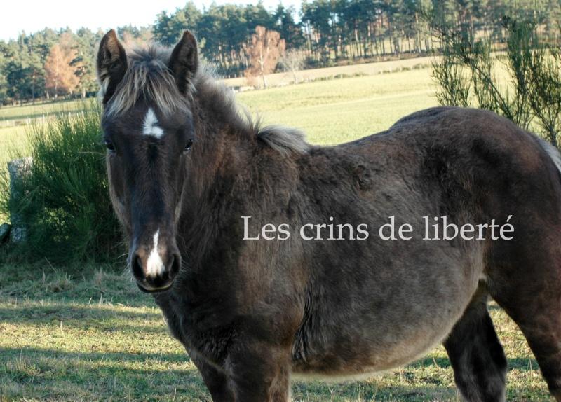 Dpt 48 - Capucine - OC Comtoise - Sauvée par Ann Crowe !! ANGLETERRE (2012) Dsc_0199