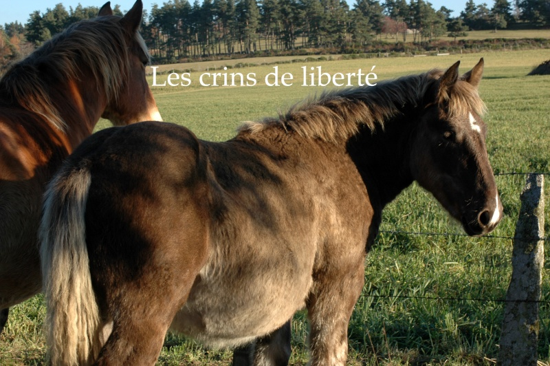 Dpt 48 - Capucine - OC Comtoise - Sauvée par Ann Crowe !! ANGLETERRE (2012) Dsc_0201