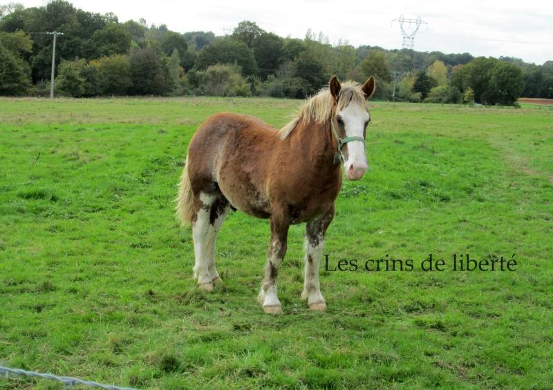 Dpt 35 - Coco - Trait Breton PP - Sauvé par Euryale ! (Janvier 2013) - Page 15 Img_0010