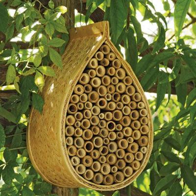 avez- vous une maison pour les papillons? Aaaaa384