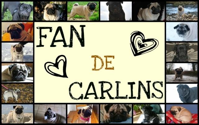 Fan de Carlins
