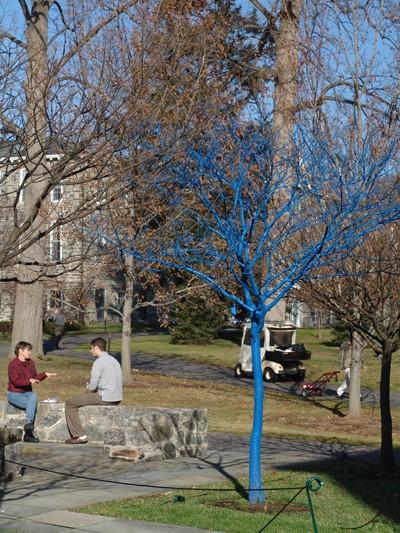 Un arbre bleu.. - Mount Annan (près de Sydney) - Australie Bluetr11