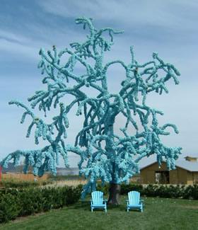 Un arbre bleu.. - Mount Annan (près de Sydney) - Australie Corner10