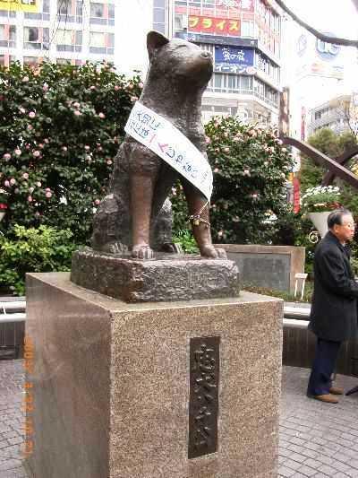 HACHIKO : Une fidélité à toute épreuve - Tokyo - Japon Hachik10