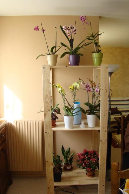 Mon étagère a Orchidées Dsc01610