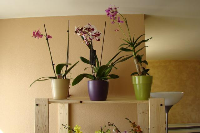 Mon étagère a Orchidées Dsc01611