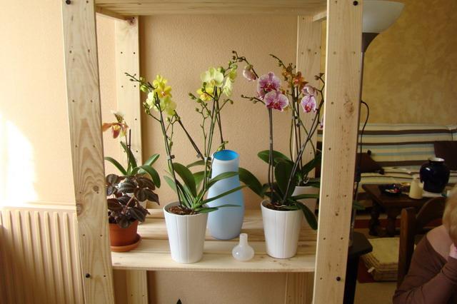 Mon étagère a Orchidées Dsc01612
