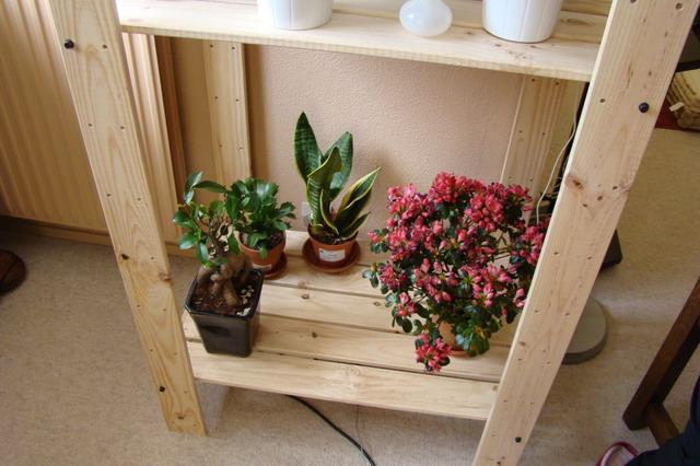 Mon étagère a Orchidées Dsc01613