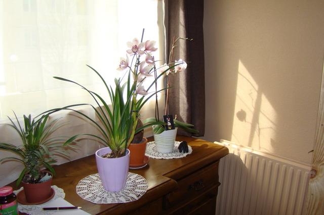 Mon étagère a Orchidées Dsc01614