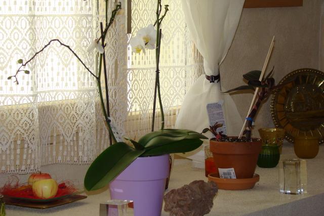 Mon étagère a Orchidées Dsc01616