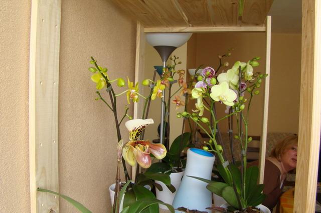 Mon étagère a Orchidées Dsc01621