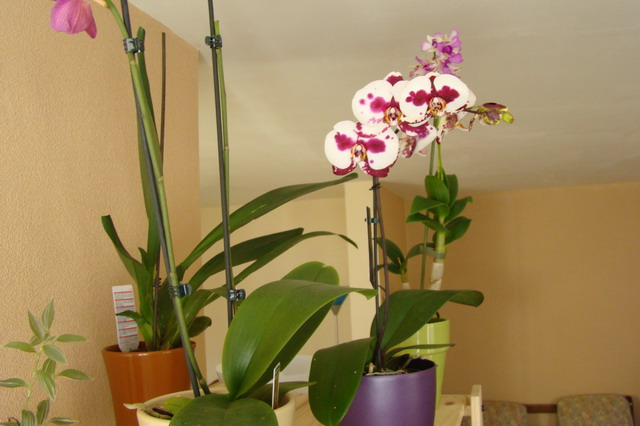Mon étagère a Orchidées Dsc01622