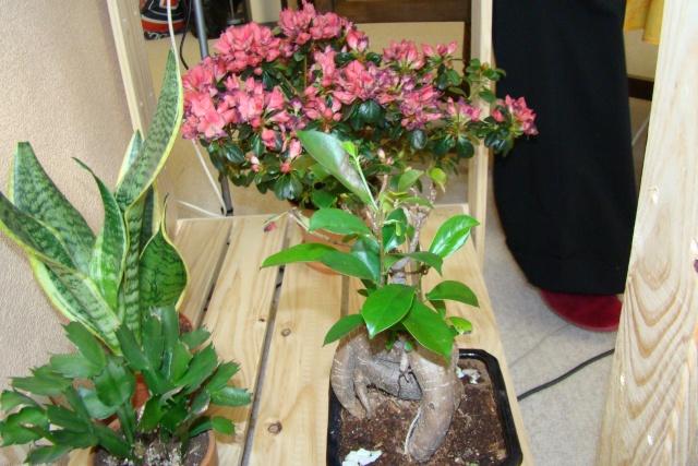 Mon étagère a Orchidées Dsc01627