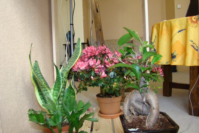 Mon étagère a Orchidées Dsc01628
