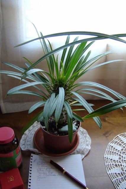 Mon étagère a Orchidées Dsc01630