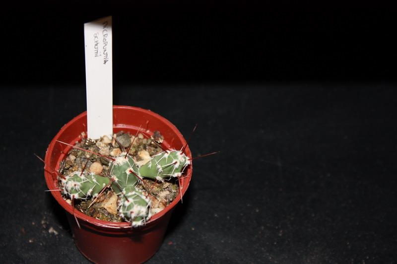 Mon Gardenia Img_2012