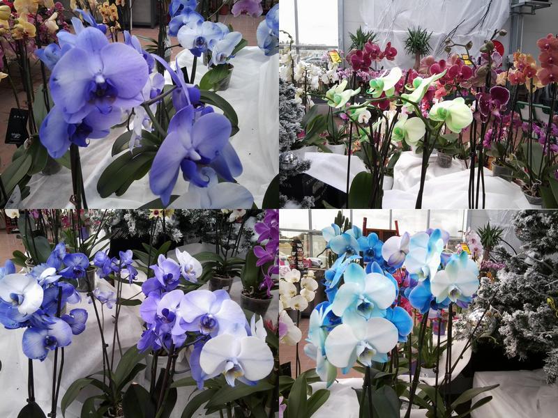 Ma première orchidée! - Page 3 Orchid15