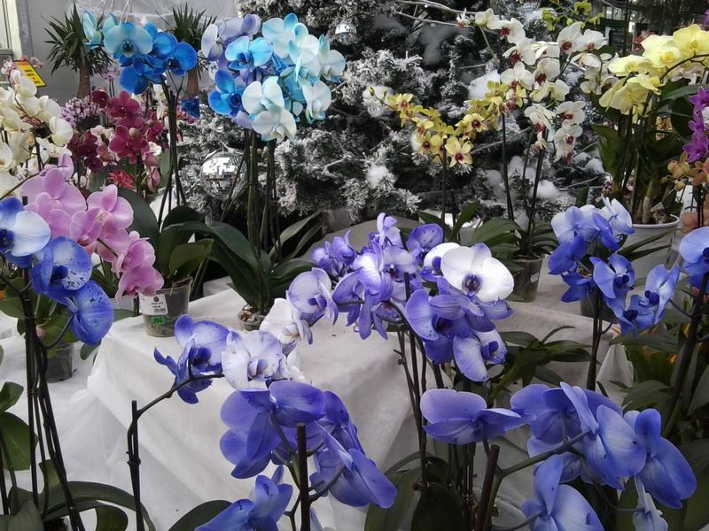 Ma première orchidée! - Page 3 Photo011