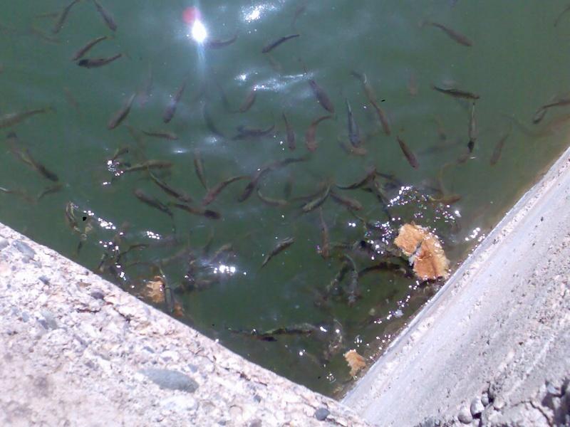 150 /5 dursun karaduman fatih durmaz baraj ve içindeki balıklar Gorunt47