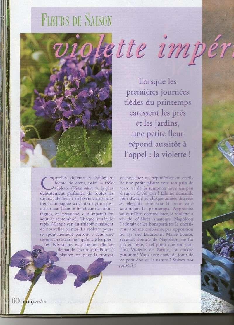 Des violettes Img01010