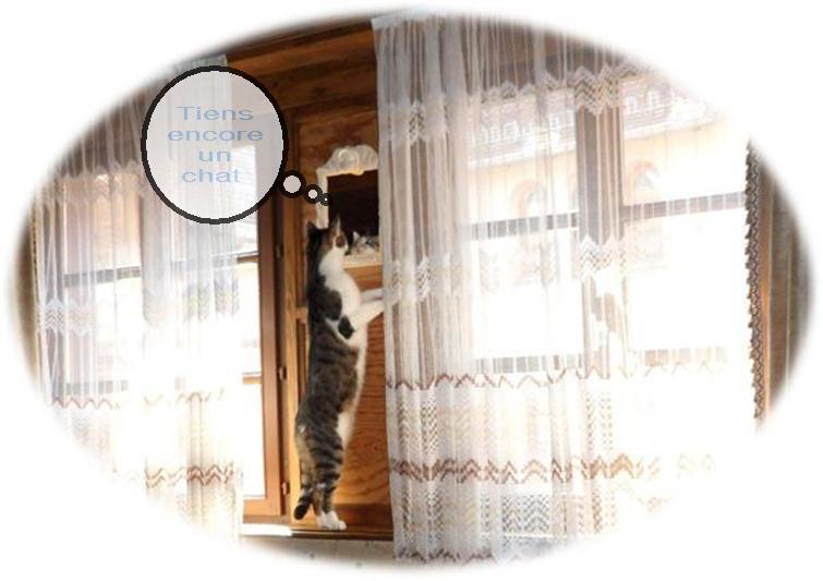 le chat fripouille Cid_c611