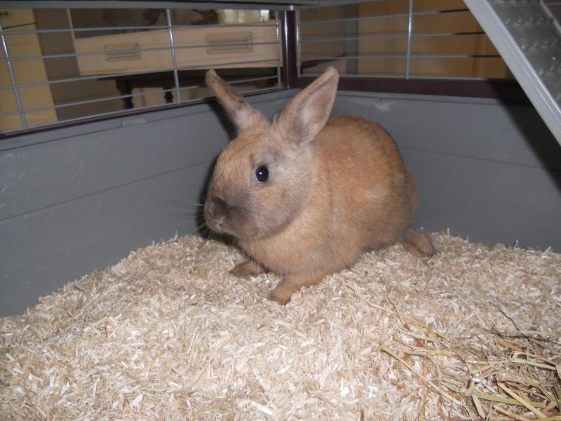 Caramelle , lapine femelle née en mars 2011 ( Adoptee ) Dscn1714