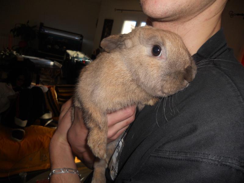 Caramelle , lapine femelle née en mars 2011 ( Adoptee ) Dscn1716