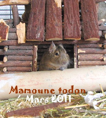 Mamoune , Frimousse , Ficelle et Mistour  ( 75 ) Adoptes ! Img_7510