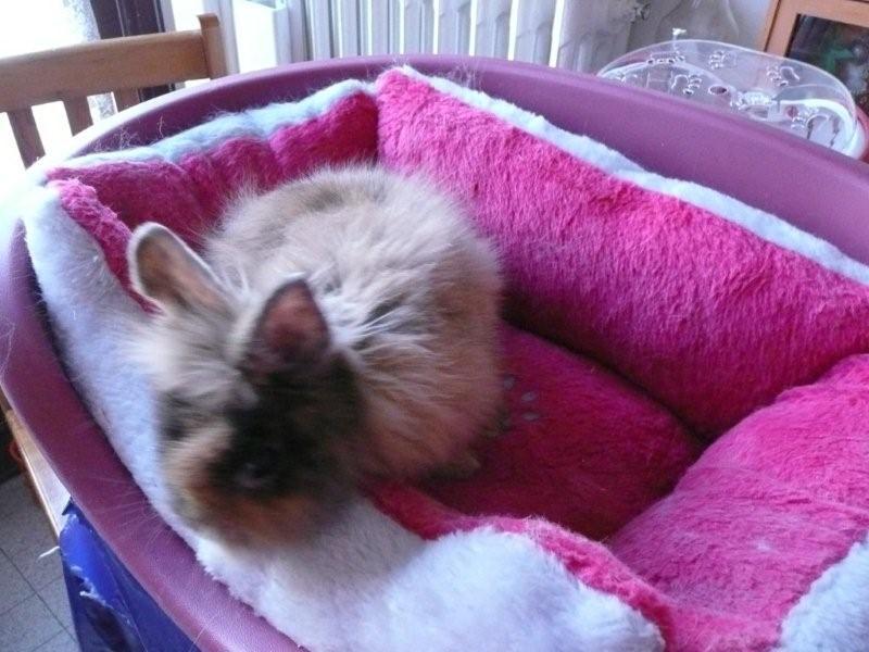 Un lapin trouvé dans la neige ....C'est Valentine ! ( Adoptee )  P1000810
