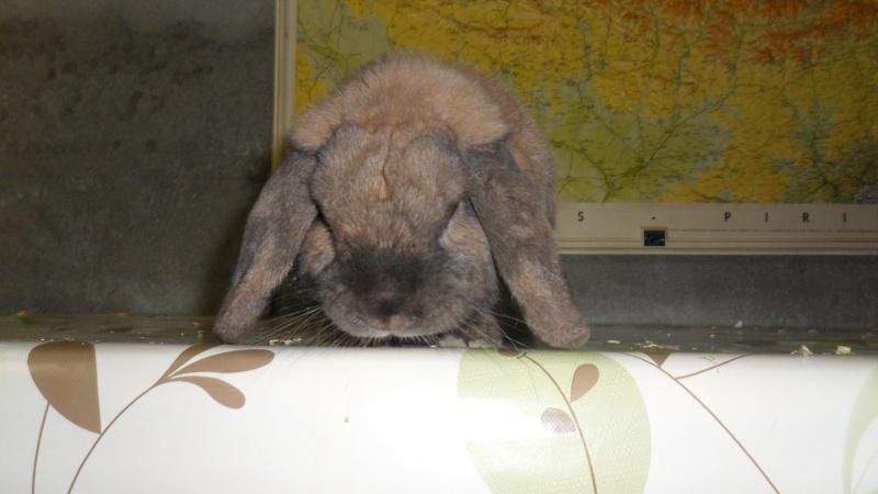 HOUBLON, lapin mâle ( Adopte ! ) Sam_1411