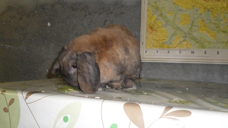HOUBLON, lapin mâle ( Adopte ! ) Sam_1412