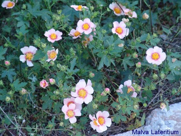 Les plantes couvre-sol Dsc00411