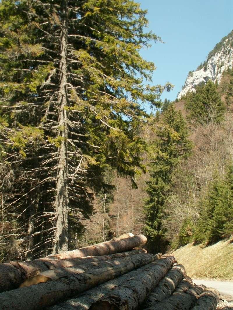 Monument des GLIERES Pict0525