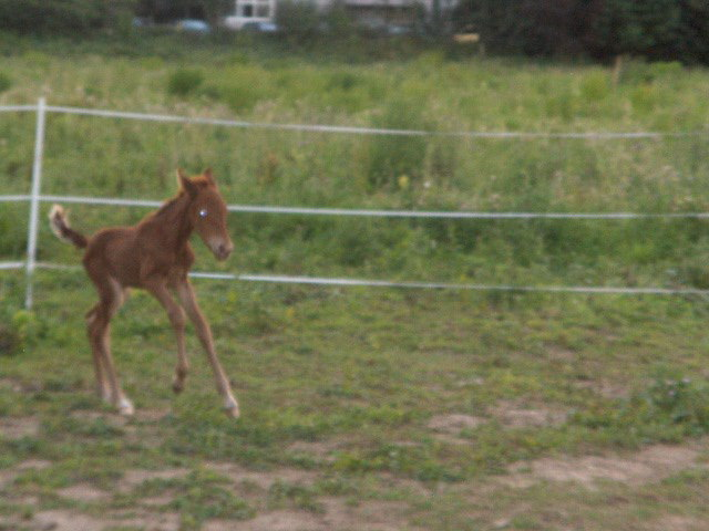 "Concours : ""cheval au galop"" GAGNANTE : TItâne - Page 2 Hpim6243"