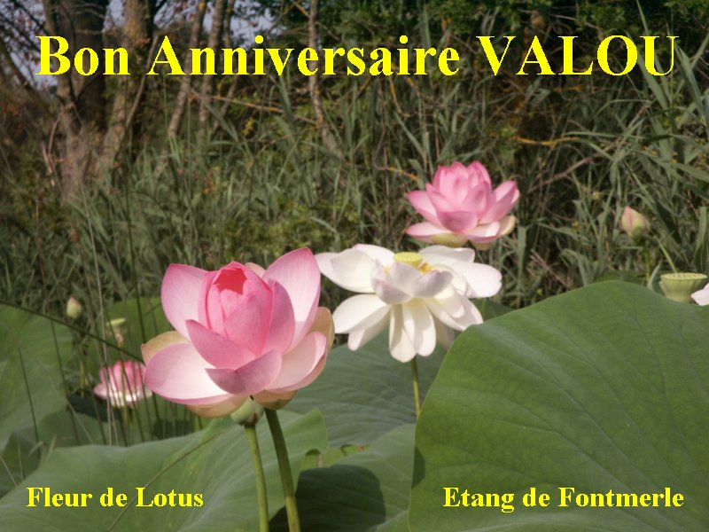 Joyeux Anniversaire Valou ! Anival11