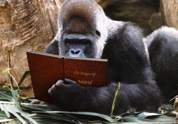 L'Homo-consciens, cet humain en devenir - Portail Gorill11
