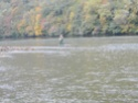 Drina u oktobru... 04_10_11