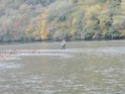 Drina u oktobru... 04_10_12